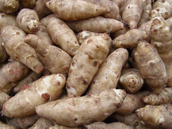 loose harvested jerusalem artichoke