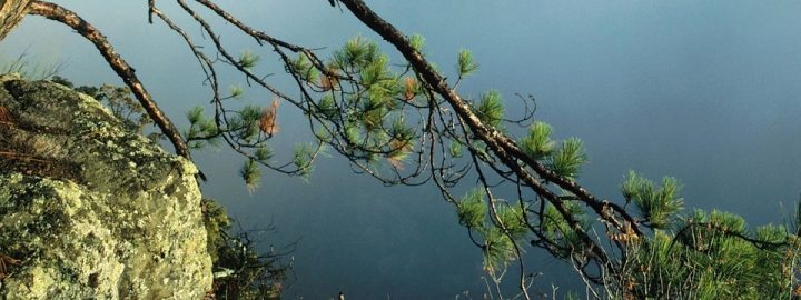 pine-bark-tree-branch