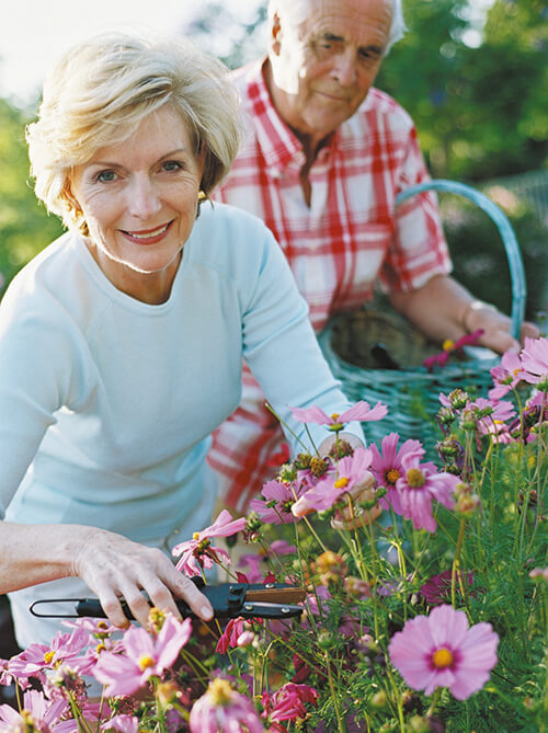 elderly couple therapeutically enjoying the gardening
