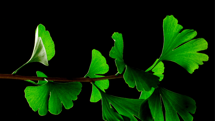 herbal-viagra