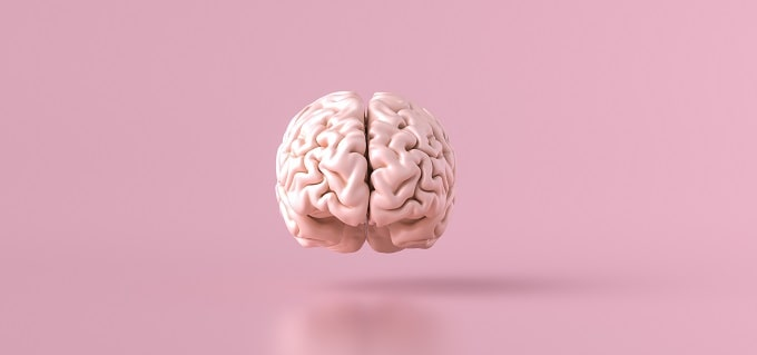 What is the brain made of? How can nootropics help to boost focus