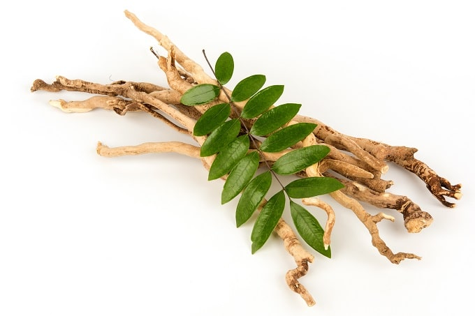 Tongkat Ali root extract can help your body increase testosterone levels